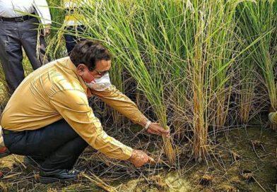 जिलाधिकारी (डीएम) : जिलाधिकारी ने किसानों को फसल काटने का सही तरीका बताया